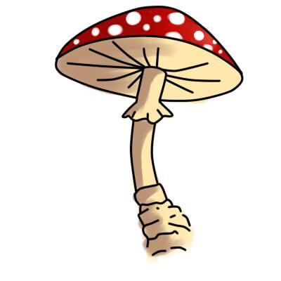 Как нарисовать грибы поэтапно карандашом 10
