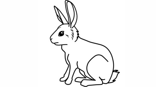 Як намалювати зайця поетапно олівцем