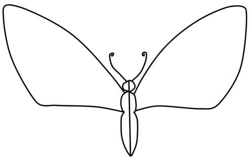 как нарисовать бабочку поэтапно карандашом шаг 3
