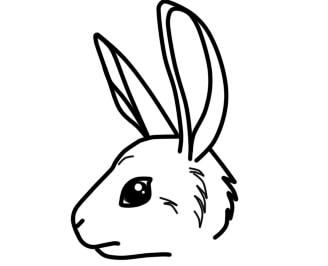 как нарисовать зайца ребенку