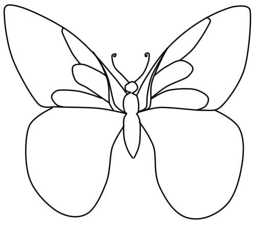 как нарисовать бабочку поэтапно карандашом шаг 5