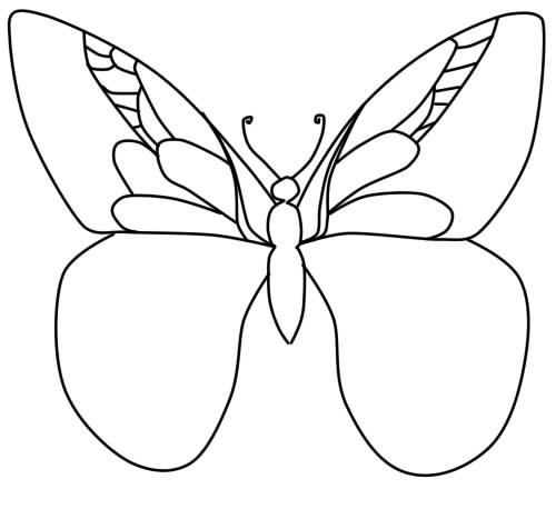 как нарисовать бабочку поэтапно карандашом шаг