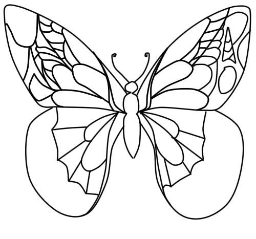 красивые бабочки картинки нарисованные карандашом