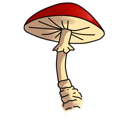 Как нарисовать грибы поэтапно карандашом 9