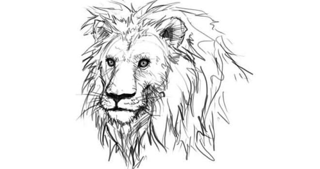 как рисовать льва карандашом поэтапно: