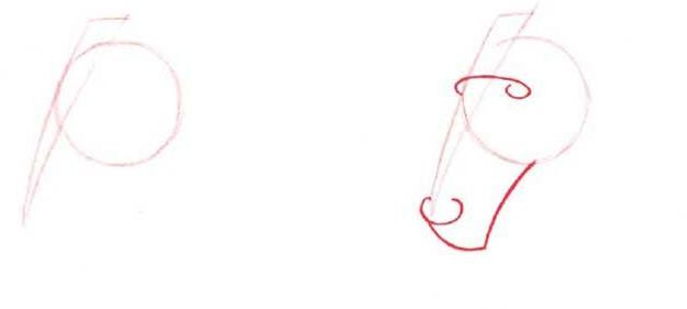 как нарисовать голову лошади этап 1