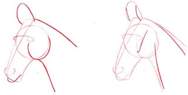 как нарисовать голову лошади этап 2