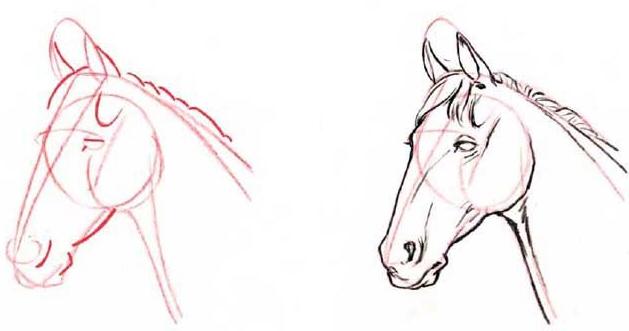 как нарисовать голову лошади этап 3