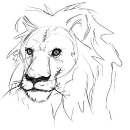 как нарисовать голову льва шаг 5