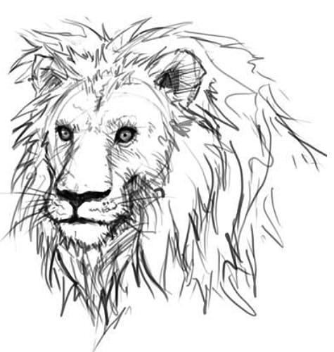 как нарисовать голову льва шаг 6