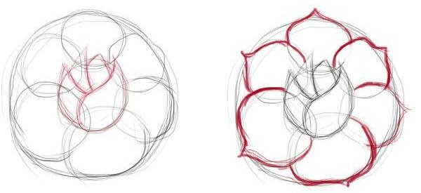 как нарисовать простую розу этап 2