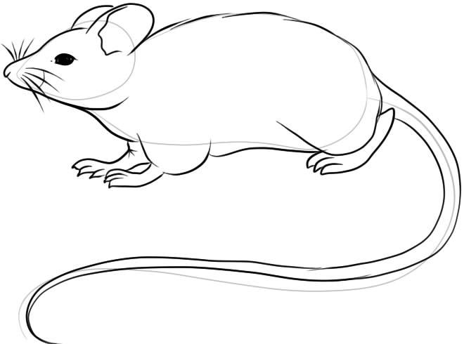 как нарисовать мышь карандашом поэтапно