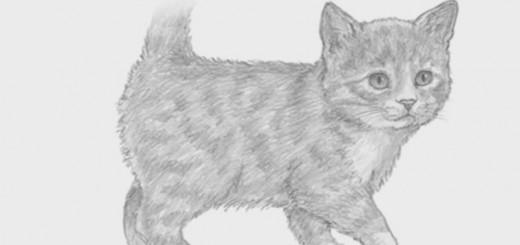 видеоурок как нарисовать котенка