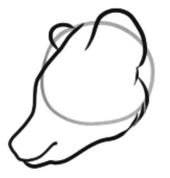 как нарисовать медведя шаг 2