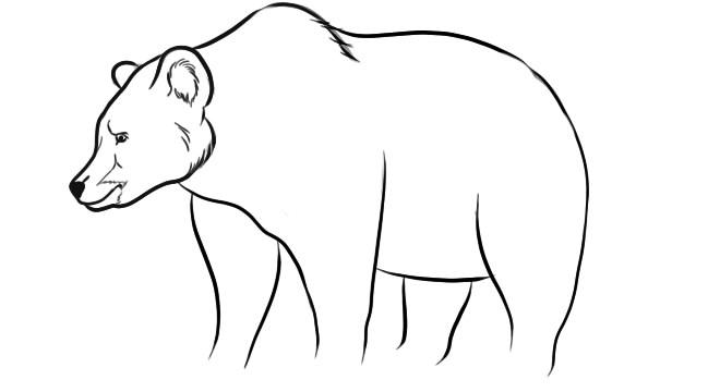 как нарисовать медведя шаг 6