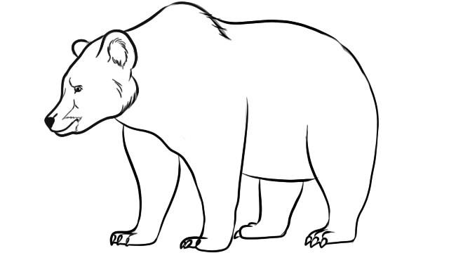 как нарисовать медведя шаг 7