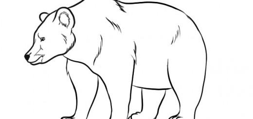 как нарисовать медведя шаг 8
