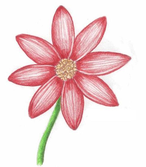 как нарисовать простой цветок