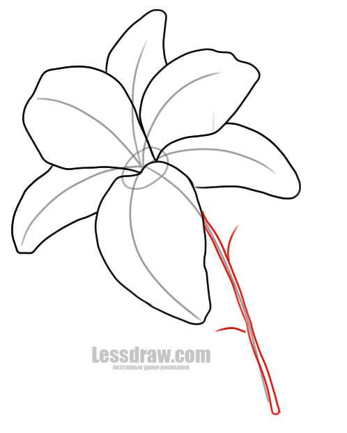 Как нарисовать лилию поэтапно карандашом