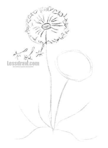 Как нарисовать одуванчик карандашом поэтапно