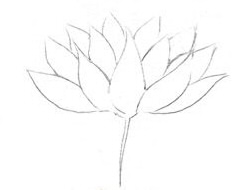 Как нарисовать красивый цветок поэтапно
