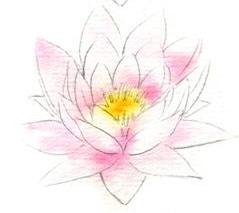 Как нарисовать водяную лилию