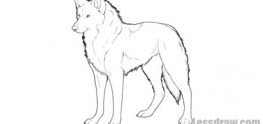 как нарисовать волка карандашом пошагово