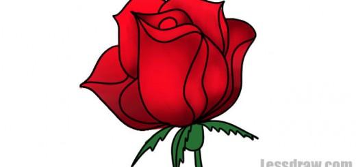 нарисовать бутон розы