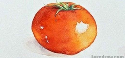 помидор акварелью