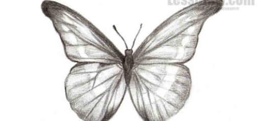 рисунок бабочки карандашом поэтапно