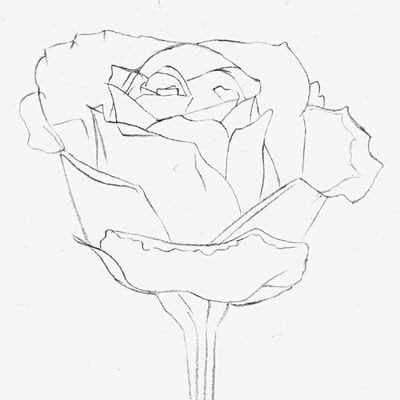 рисунки фото розы