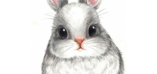 картинки зайчик красивые