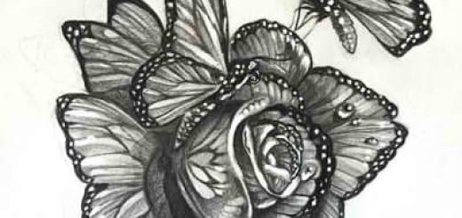 рисунки розы карандашом для начинающих