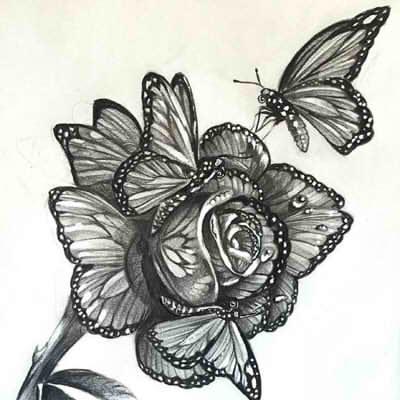 рисунки розы карандашом картинки