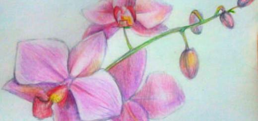 Как нарисовать цветок Орхидею цветными карандашами поэтапно