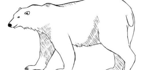 нарисовать белого медведя