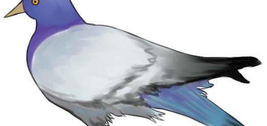 нарисовать голубя ребенку